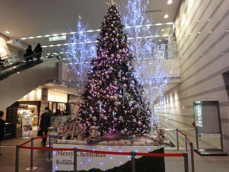 20091225trees_0019