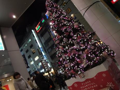 20091225trees_0037